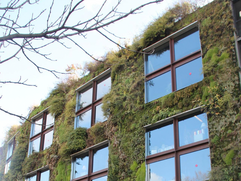 Isolamento termico e acqua drenata grazie alle coperture vegetali sul tetto